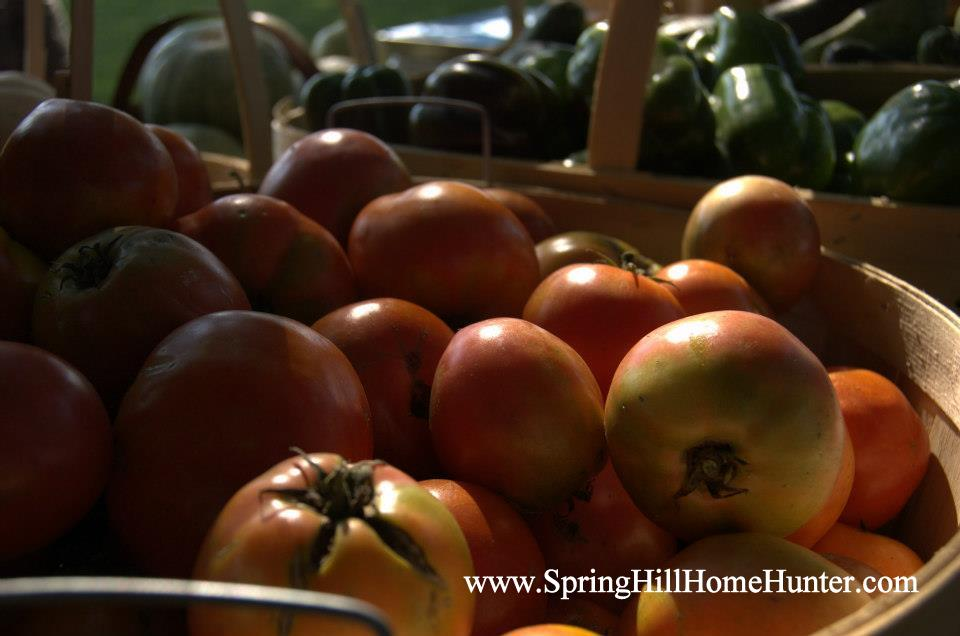 Spring Hill Home Hunter